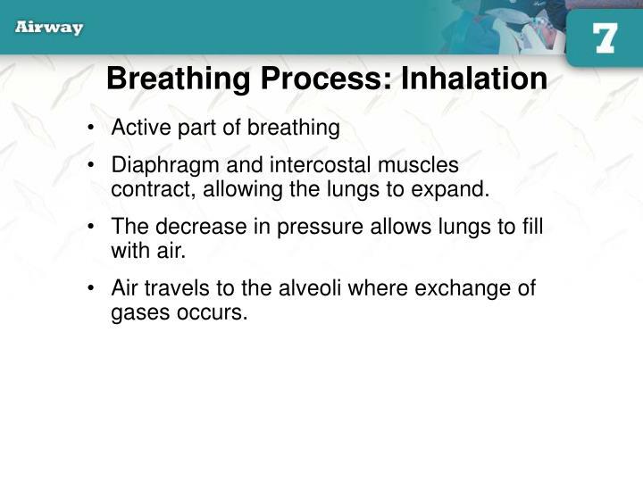 Breathing Process: Inhalation