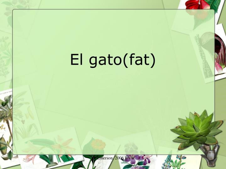 El gato(fat)