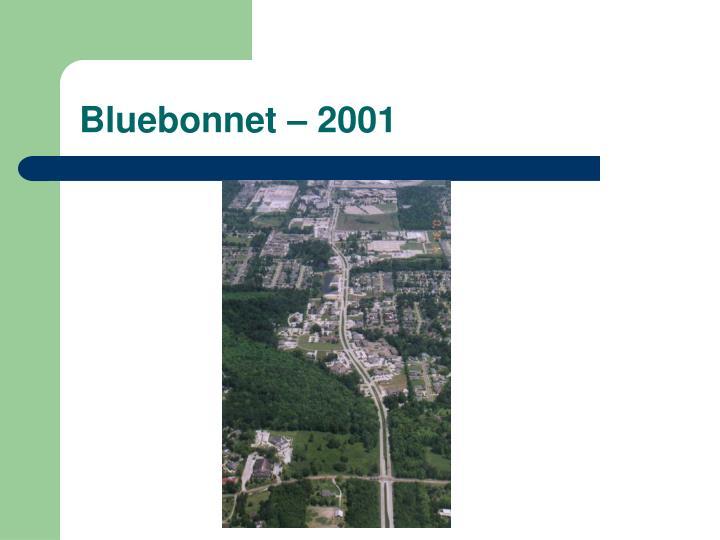 Bluebonnet – 2001