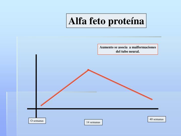 Alfa feto proteína