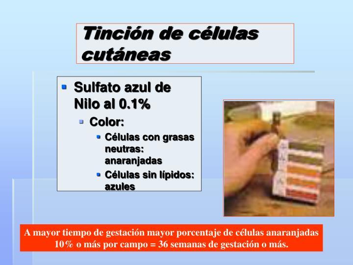 Tinción de células cutáneas