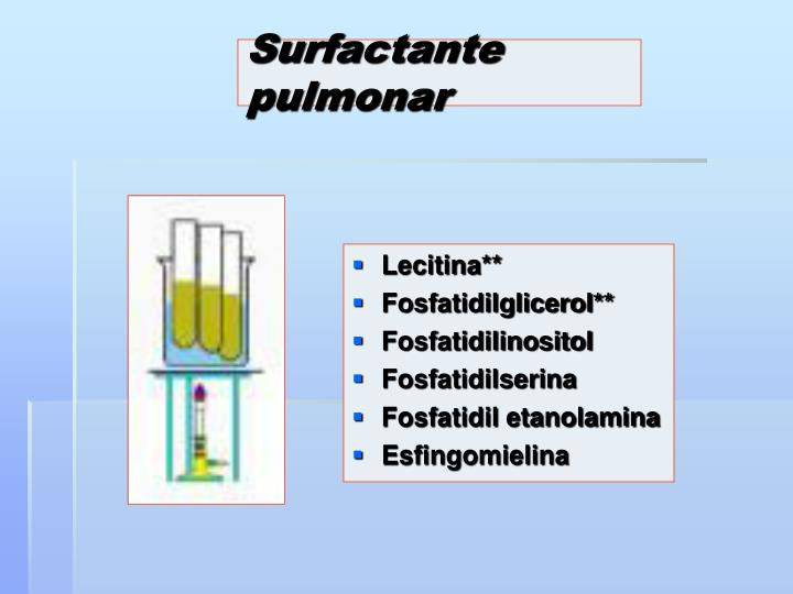 Surfactante pulmonar