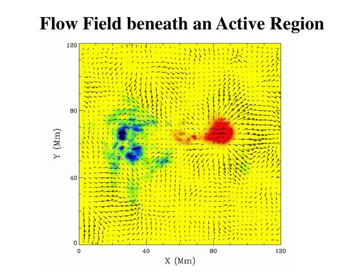 Flow Field beneath an Active Region