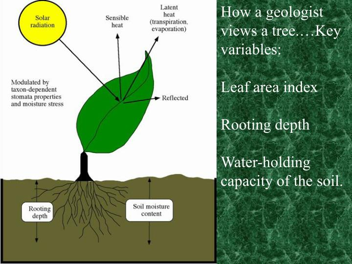 How a geologist views a tree.…Key variables: