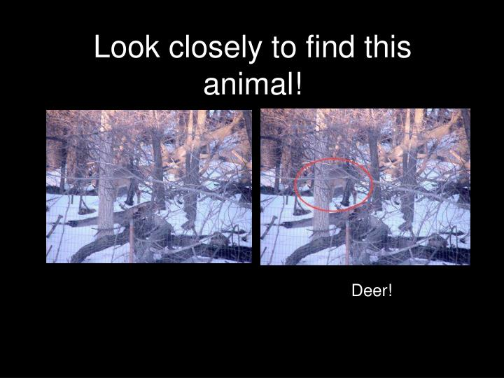 Look closely to find this animal!