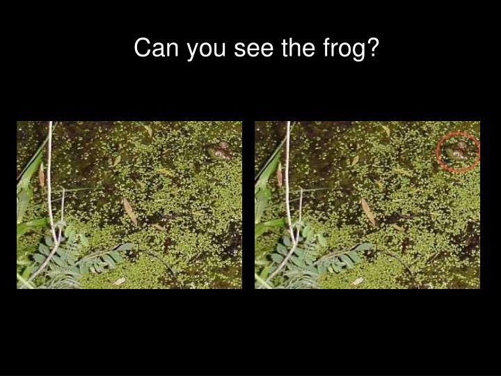 Can you see the frog?