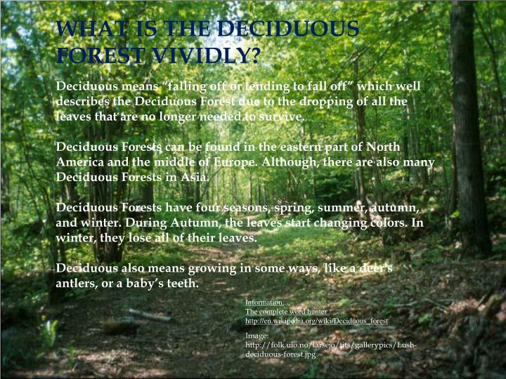 WHAT IS THE DECIDUOUS FOREST VIVIDLY?