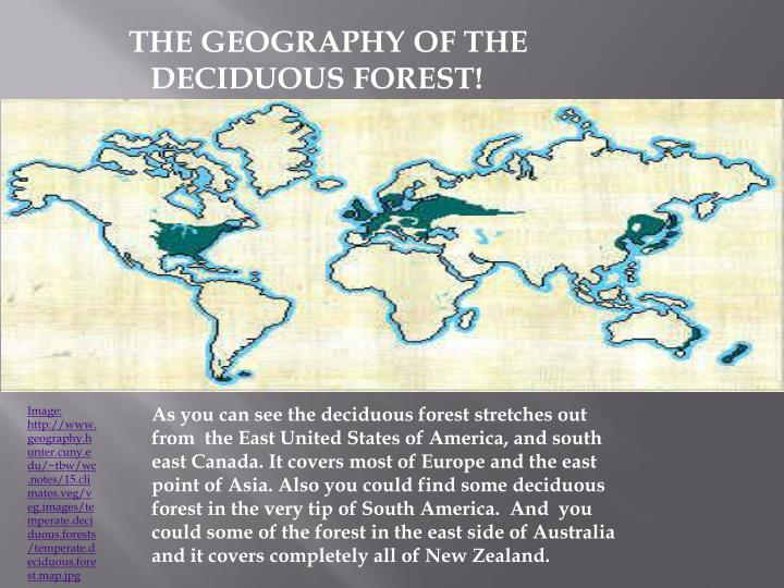 THE GEOGRAPHY OF THE     DECIDUOUS FOREST!