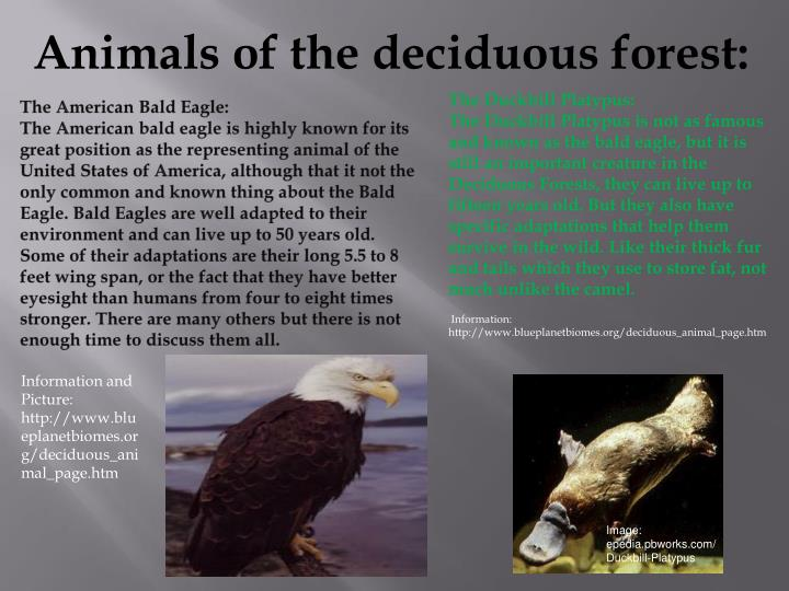Animals of the deciduous forest: