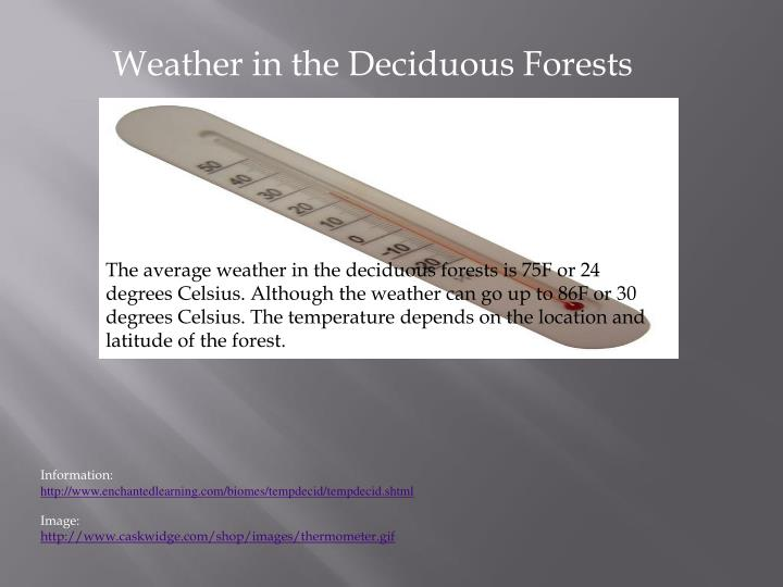Weather in the Deciduous Forests