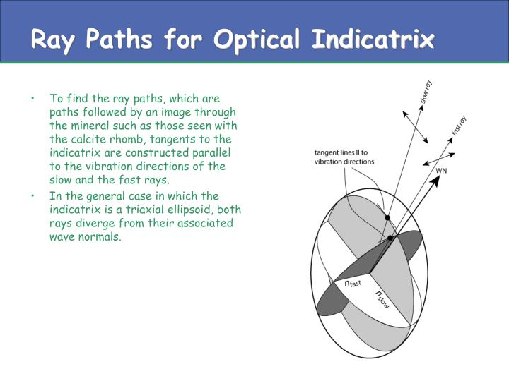 Ray Paths for Optical Indicatrix