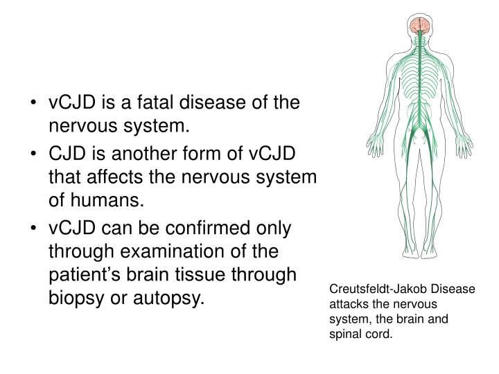 vCJD is a fatal disease of the nervous system.