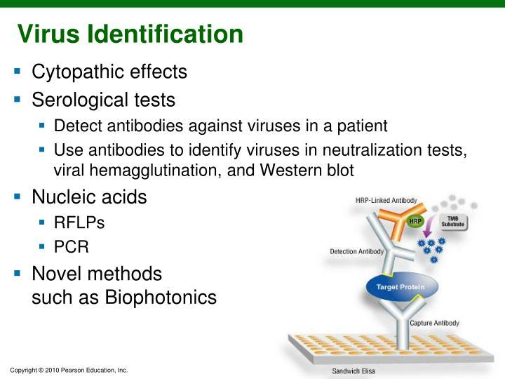 Virus Identification