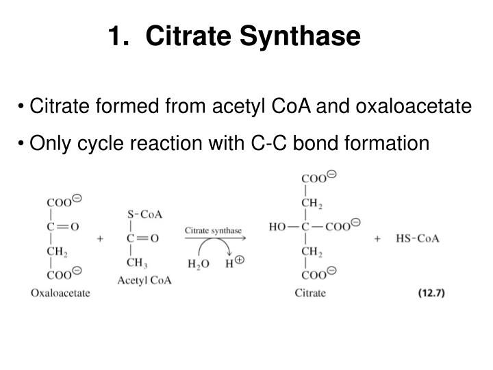 1.  Citrate Synthase