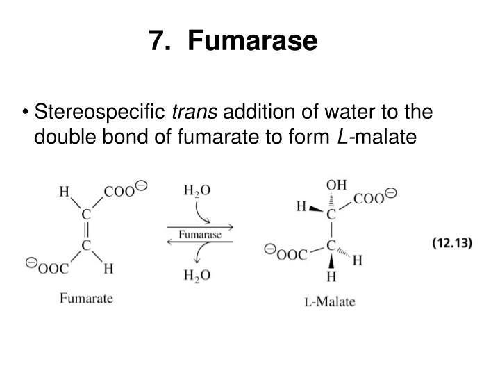 7.  Fumarase