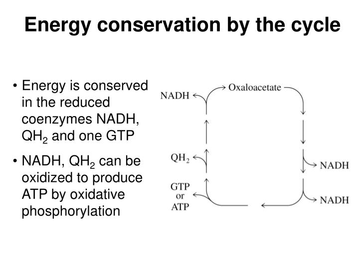 Energy conservation by the cycle