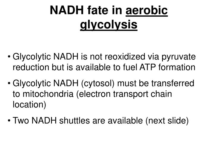 NADH fate in