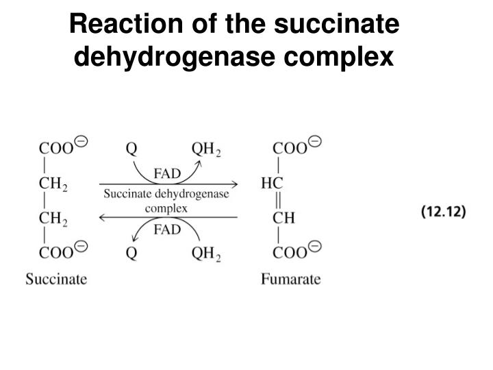 Reaction of the succinate