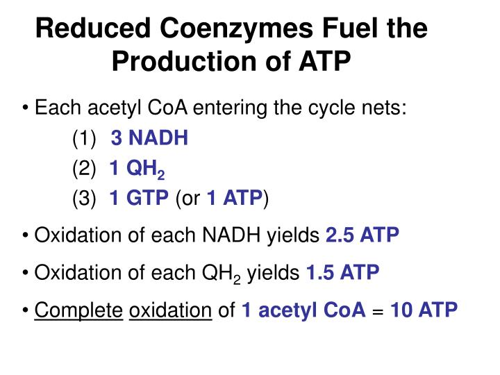 Reduced Coenzymes Fuel the Production of ATP