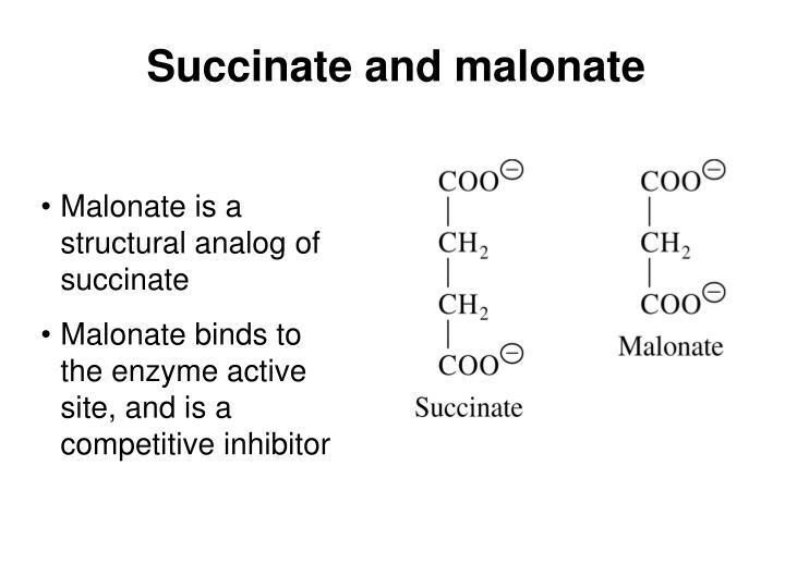 Succinate and malonate