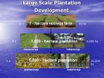large scale plantation development