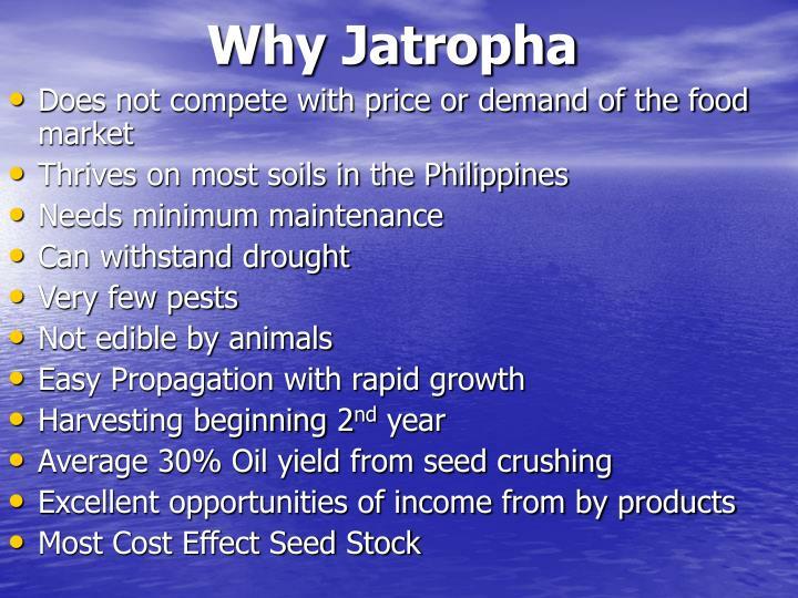 Why Jatropha