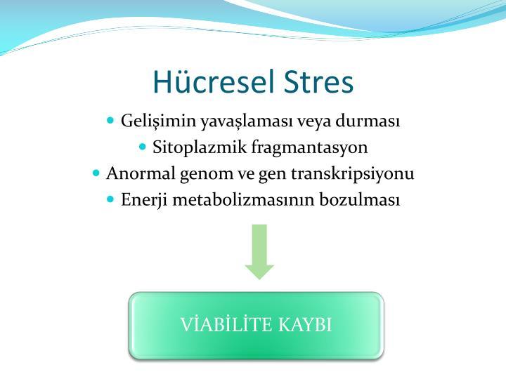 Hücresel Stres