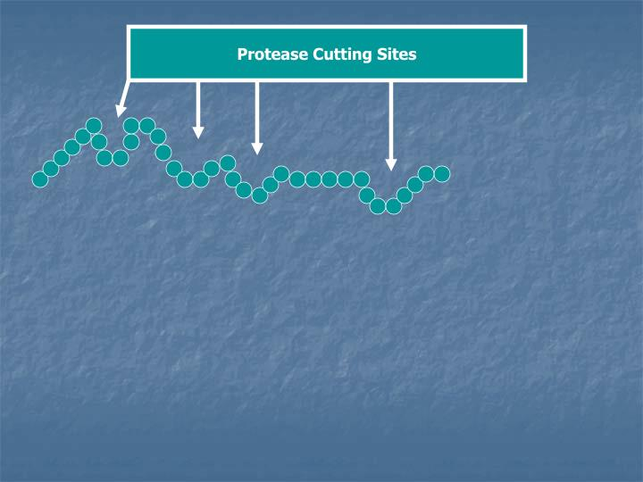 Protease Cutting Sites