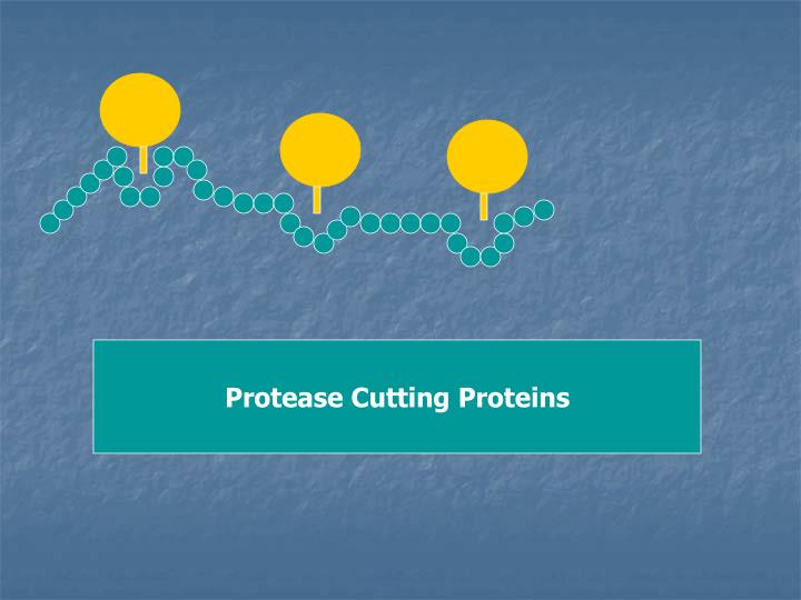 Protease Cutting Proteins