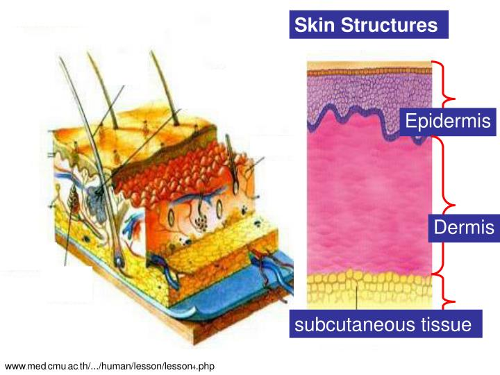 Skin Structures