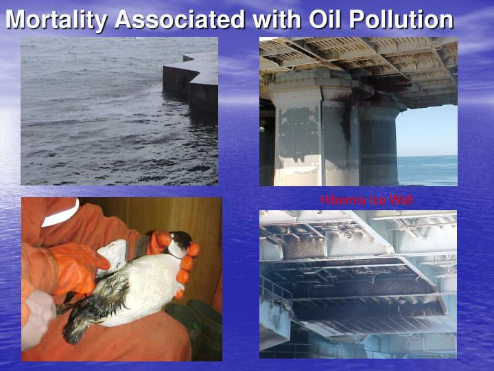 Mortality Associated with Oil Pollution