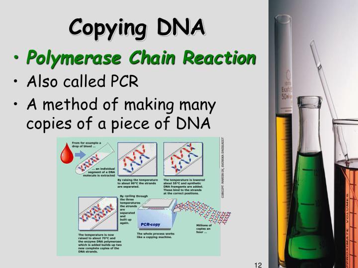 Copying DNA
