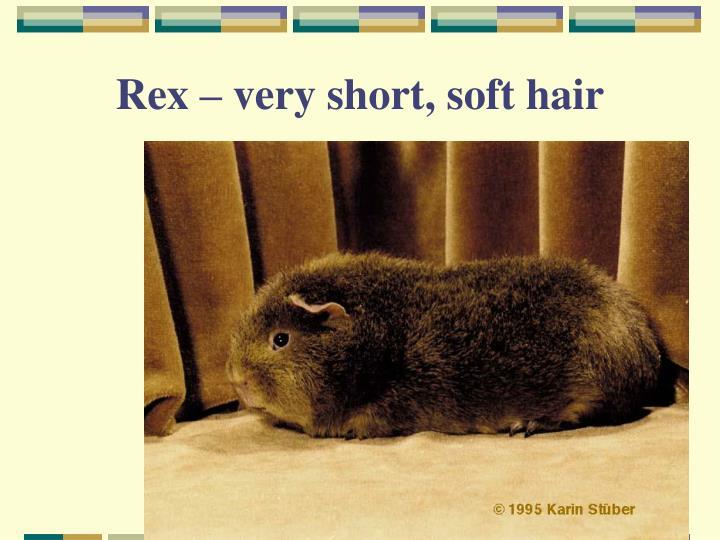 Rex – very short, soft hair