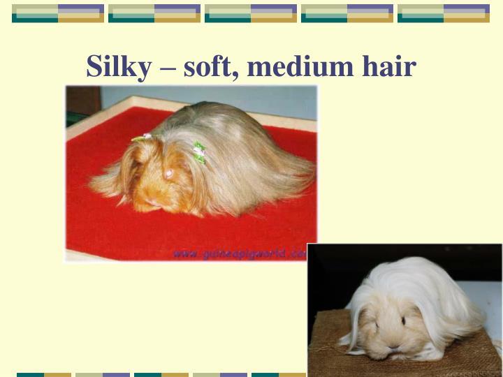 Silky – soft, medium hair
