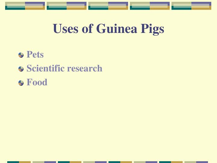 Uses of Guinea Pigs