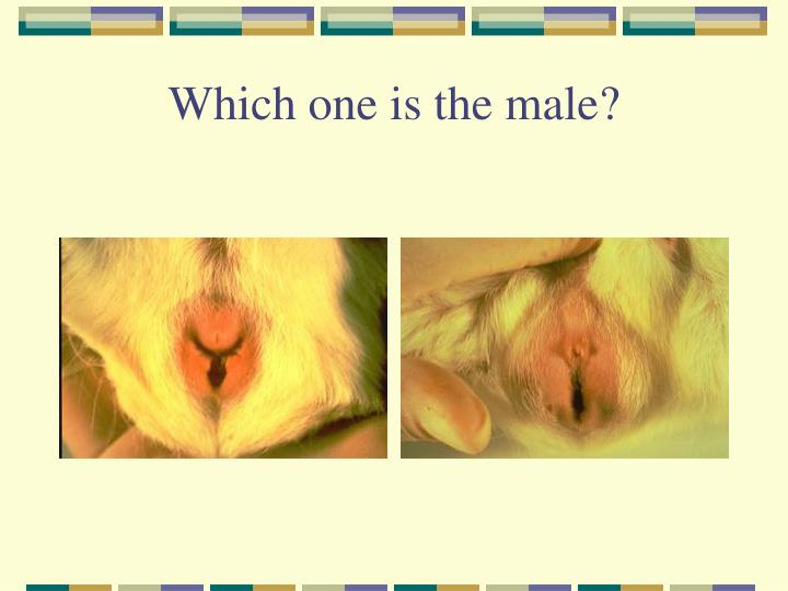 Which one is the male?