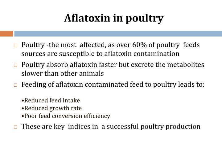 Aflatoxin in poultry