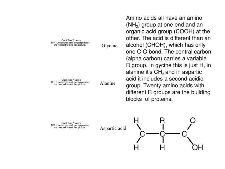 Amino acids all have an amino (NH