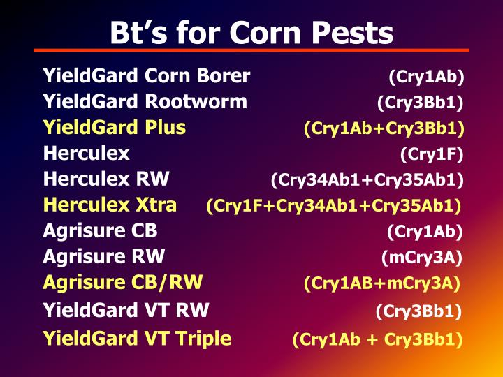 Bt's for Corn Pests