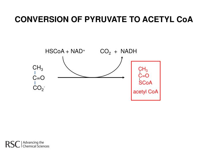 CONVERSION OF PYRUVATE TO ACETYL