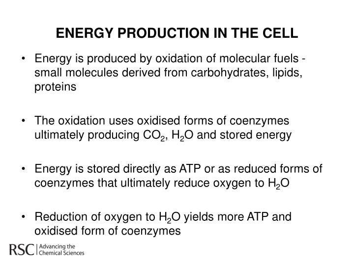 ENERGY PRODUCTION IN THE CELL