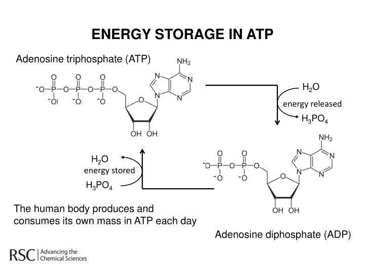 ENERGY STORAGE IN ATP