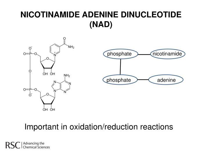 NICOTINAMIDE ADENINE DINUCLEOTIDE (NAD)