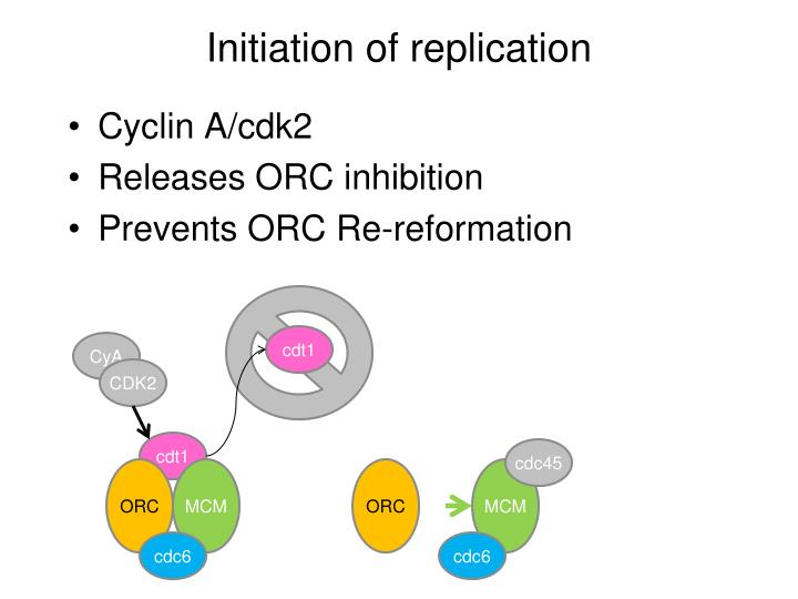 Initiation of replication