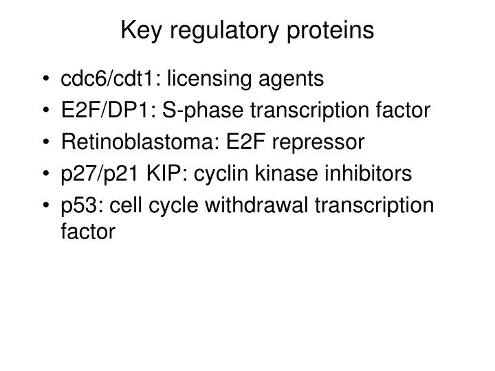Key regulatory proteins