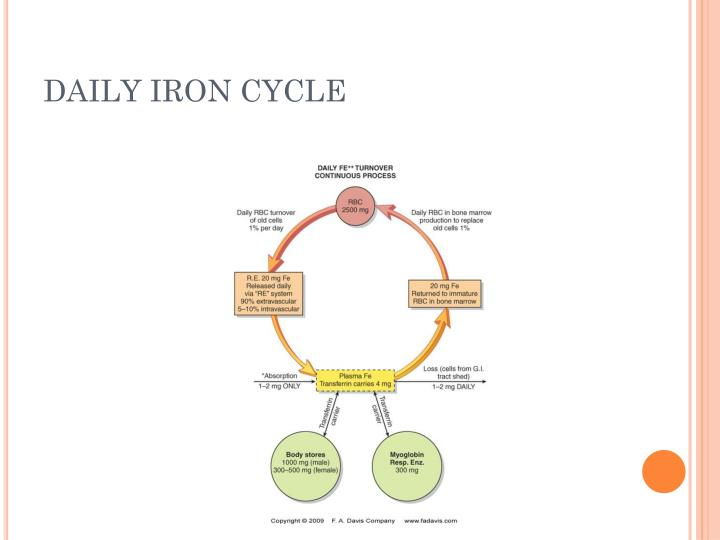 DAILY IRON CYCLE