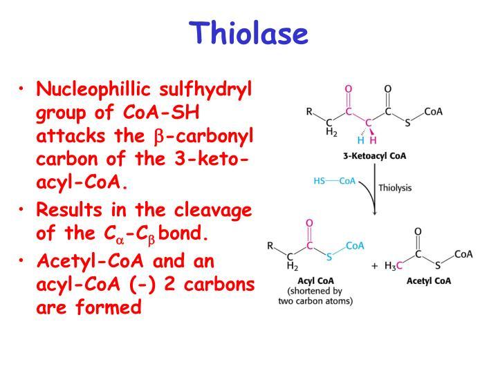 Thiolase