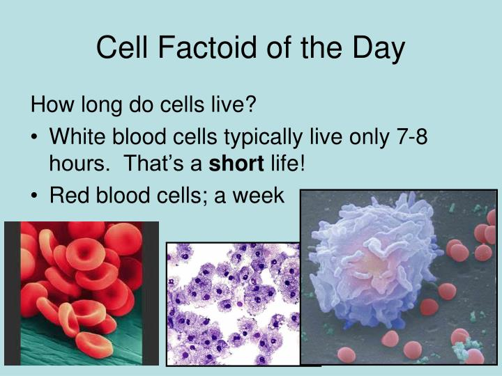 Cell factoid of the day