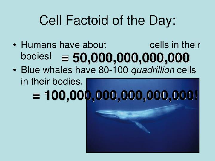 Cell Factoid of the Day: