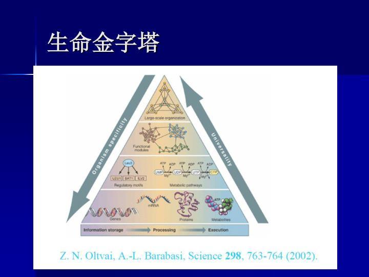 生命金字塔